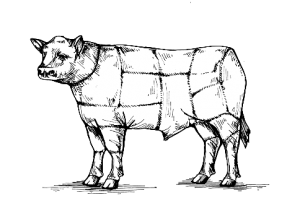 Cow-Illustration